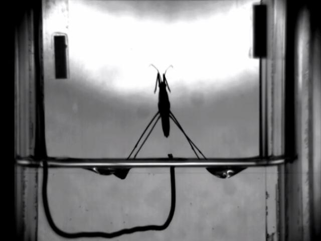 「水上飄」輕功了得!能靠表面張力行走、跳躍的「水蜘蛛」機器人-3.png